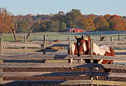 Jason Neely Acrylic Prints - Horses on an Autumn Morning Acrylic Print by Jason Neely
