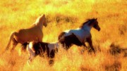 Running Horses Photos - Horses on Golden Hill by Gus McCrea
