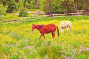 Horses Paradise Print by Karol  Livote