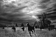 White Horse  Framed Prints - Horses Running Black White Surreal Nature Landscape Print by Kathy Fornal