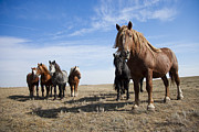 Watching Over Metal Prints - Horses Stand In A Field On A Sunny Day Metal Print by Taylor S. Kennedy
