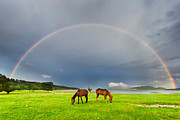 Grazing Horse Posters - Horses Under  Rainbow Poster by Evgeni Dinev Photography