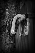 Kelly Photo Prints - Horseshoes Print by Kelly Hazel