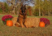 Hoss In Autumn II Print by Sandy Keeton