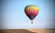 Flock Of Birds Art - Hot Air Balloon And Birds by Photo by Greg Thow