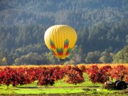 Hot Air In The Valley Print by Gail Salituri