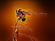 Bee Digital Art - Hot Buzz by Bill Tiepelman