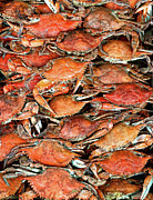 Seafood Posters - Hot Crabs Poster by Sky Noir Photography by Bill Dickinson