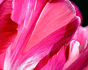 Flower Design Photos - Hot Pink by Rona Black