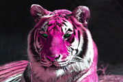 White Fur Prints - Hot pink Tiger Print by Rebecca Margraf