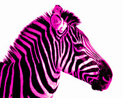 Colorful Art Photos - Hot Pink Zebra by Rebecca Margraf