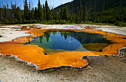 Western United States Prints - Hot Springs yellowstone Print by Garry Gay