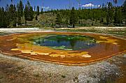 Western United States Prints - Hot springs Yellowstone National Park Print by Garry Gay
