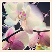 Recently Sold - Featured Art - Hothouse Orchids #android #andrography by Marianne Dow