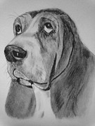 Dogs Drawings - Hound Dog by Diane Leuzzi
