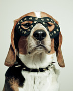 Dog Sitting Prints - Hound In Black Mask Print by Darren Boucher