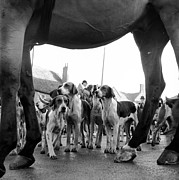 Foxhound Photos - Hounds And Horse by John Chillingworth