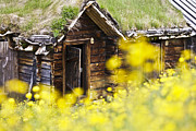 Timber House Prints - House behind Yellow Flowers Print by Heiko Koehrer-Wagner