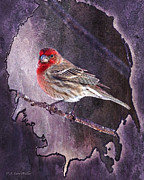 J Finch Art - House Finch Looking At Me by J Larry Walker