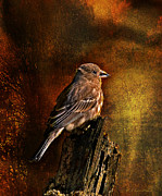 Layered Digital Art Posters - House Finch With Sunflower Seed Poster by J Larry Walker