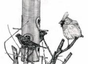 Finch Drawings Metal Prints - House Finches and Cardinal Metal Print by Joy Neasley
