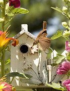Hollyhocks Photos - House Wren by Donna Caplinger