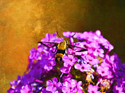 Backyard Digital Art Framed Prints - Hovering Clearwing Framed Print by J Larry Walker