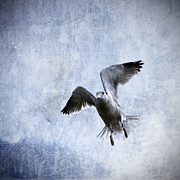 Gull Art - Hovering Seagull by Carol Leigh