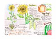 Watermelon Mixed Media Posters - How Does Your Garden Grow Poster by Rachael Anne