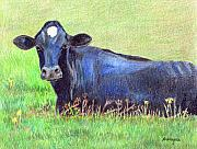 Farm Animals Drawings Posters - How Now Blue Cow Poster by Arline Wagner