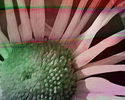 Multicolored Daisy Prints - How the Sun Rose Print by Bonnie Bruno