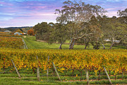 Wines Photos - Howards Vineyard by Mark Richards