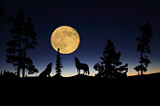 Silhouettes Mixed Media Metal Prints - Howling at the Moon Metal Print by Shane Bechler