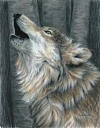 Wolf Drawings Framed Prints - Howling Wolf Framed Print by Carla Kurt