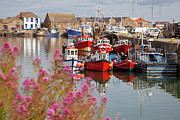 Docked Boats Photo Prints - Howth harbour Print by Gabriela Insuratelu