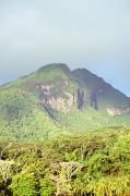 Tranquil Mountaintop Art - Huahine forest and mountaintop by Erik Aeder - Printscapes