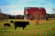 Black Angus Photo Posters - Huffacker Farm Poster by Paul Mashburn