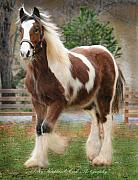 Horse Farm Posters - Huge Drum Horse Colt Noah Poster by Terry Kirkland Cook