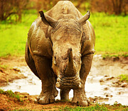 Rhinoceros Photo Posters - Huge South African rhino Poster by Anna Omelchenko