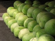 Watermelon Photos - Huge Watermelons by Yali Shi
