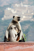 Embracing Prints - Hugging Monkeys, India Print by Shanna Baker