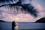 Ali Photos - Hula Dreams by Ali ONeal - Printscapes