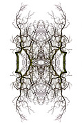 Kaleidoscope Photos - Hulk by Debra and Dave Vanderlaan
