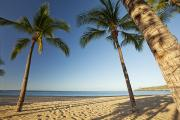Lanai And Molokai And Other Hawaiian Islands - Hulopoe Beach Palms by Jenna Szerlag