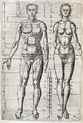 Human Nature Posters - Human Anatomy, 16th Century Artwork Poster by Middle Temple Library