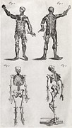 1704 Framed Prints - Human Anatomy, 18th Century Artwork Framed Print by Middle Temple Library