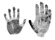 Black And White Hand Print Posters - Human And Gorilla Handprint Poster by Sheila Terry