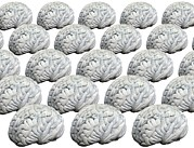Brains Prints - Human Brains, Artwork Print by Victor De Schwanberg