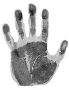 Black And White Hand Print Posters - Human Handprint Poster by Sheila Terry