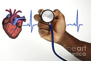 Human Heart Posters - Human Heartbeat Poster by Science Source